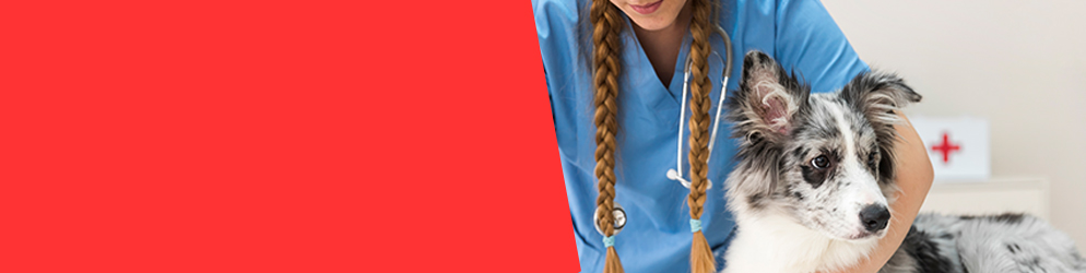 Test di ammissione Medicina veterinaria