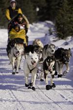 Studenti e docenti di Medicina Veterinaria assisteranno i cani del campionato europeo di Sleddog a Campo Felice