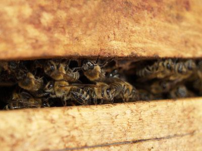 All'Università di Teramo un corso di formazione in apicoltura