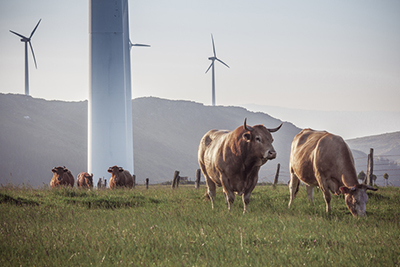Scienze delle produzioni animali sostenibili