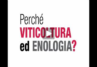 Viticoltura ed enologia